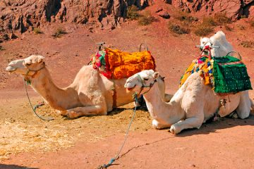 Morocco for kids